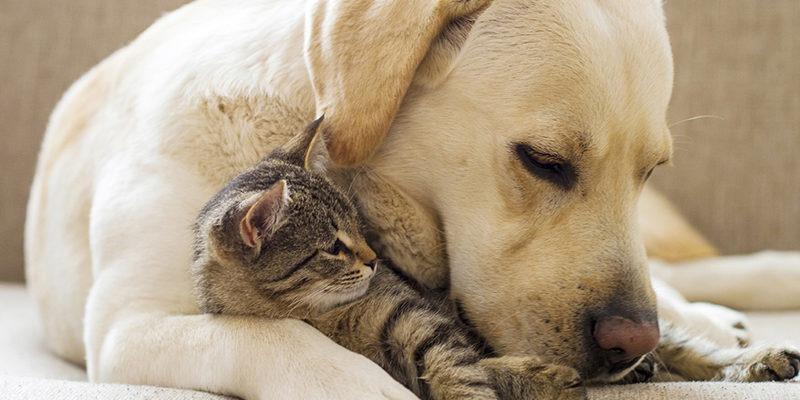 26056c2ff6d8 Αλλαγές και νέα πρόστιμα για τα κατοικίδια ζώα φέρνει ο νέος νόμος -  Maroussi News